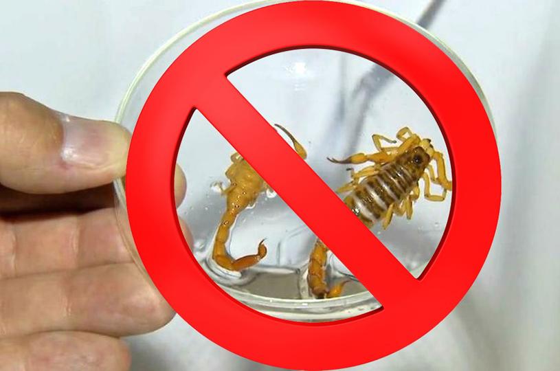 Agentes de Endemias de Eusébio receberão treinamento sobre controle de escorpiões
