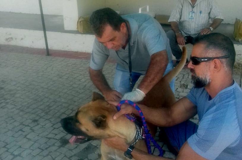 Eusébio quer imunizar 14 mil cães e gatos contra a raiva