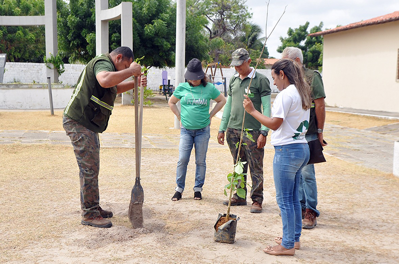 AMMA realiza projeto de arborização de praças e vias públicas