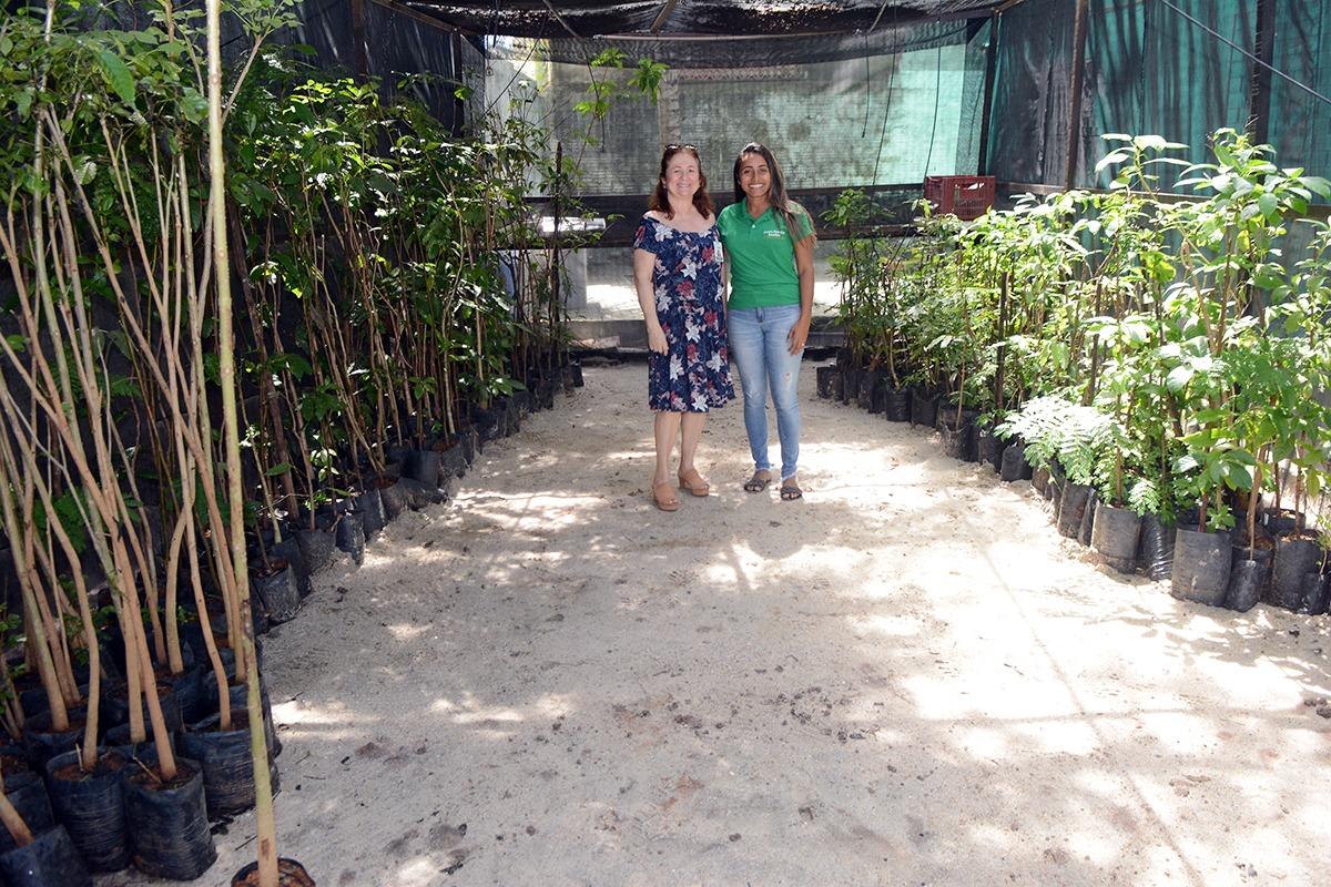 Prefeitura realiza o projeto Eusébio Verde para  ampliar a cobertura vegetal do município