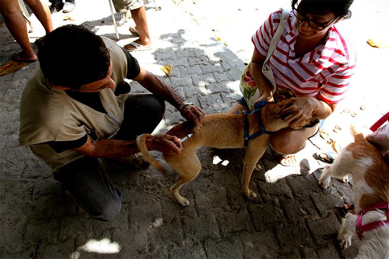 Prefeitura de Eusébio realiza Campanha Antirrábica para vacinar 15 mil cães e gatos
