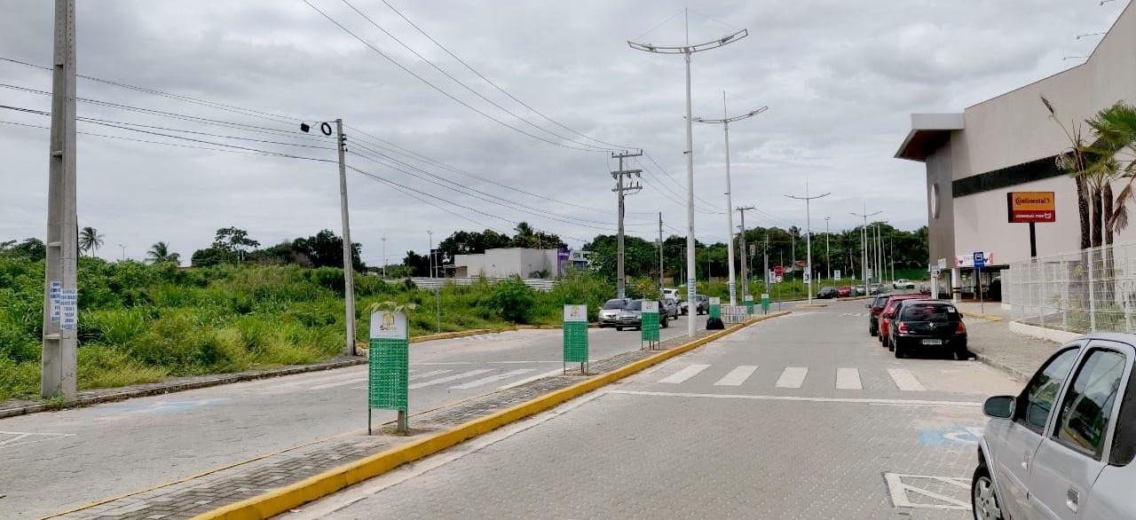 AMMA inicia plantio de mil mudas de árvores nativas em Eusébio