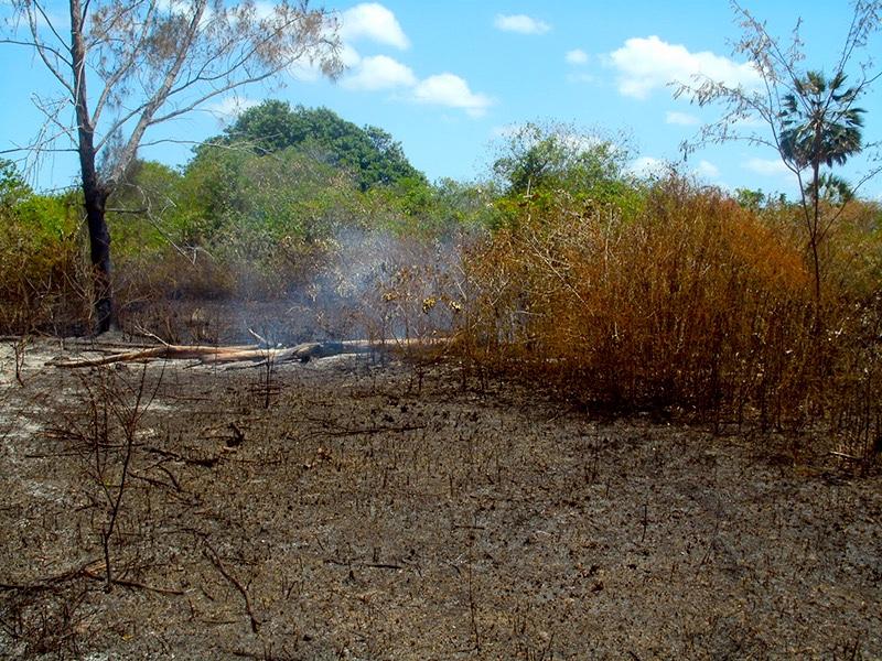 Prefeitura de Eusébio lança campanha contra queimadas no município neste segundo semestre